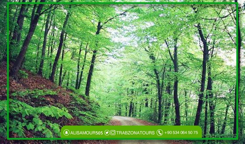 غابات بلغراد في اسطنبول